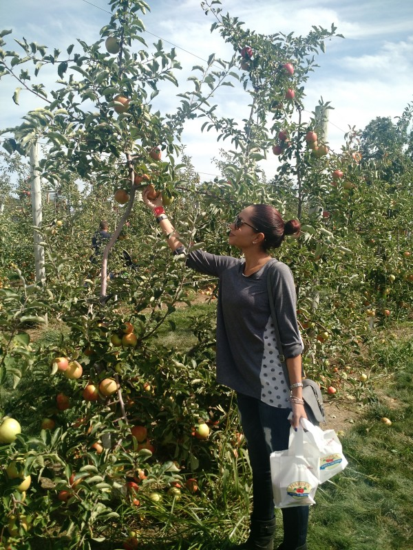 How Much Is Apple Picking On Long Island